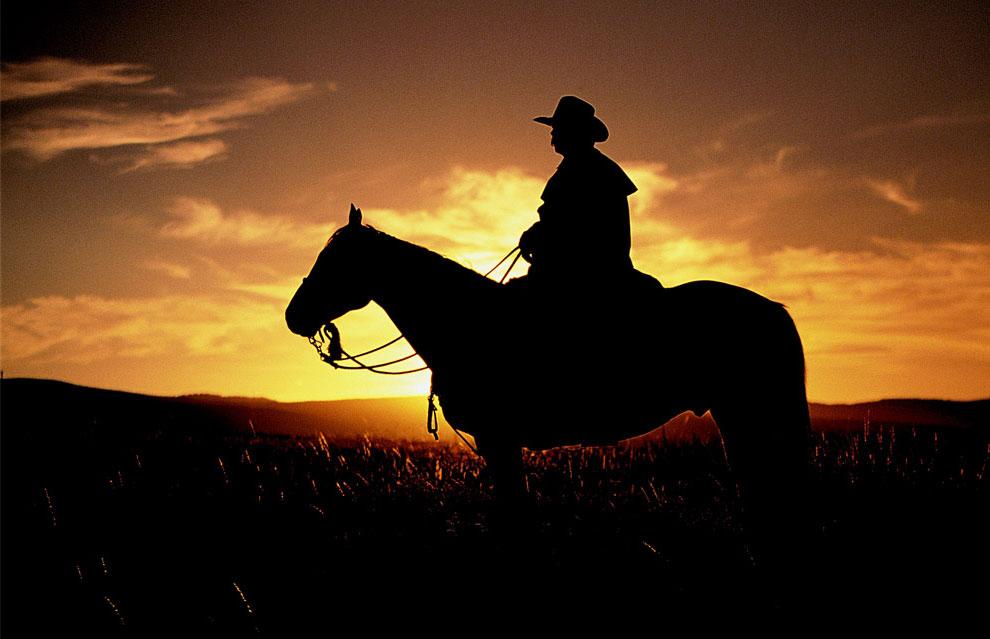 ковбой на лошади, фото