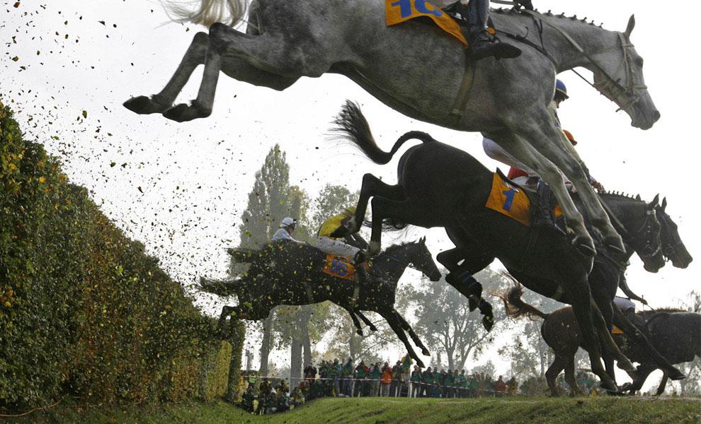 препятствия для лошади, фото
