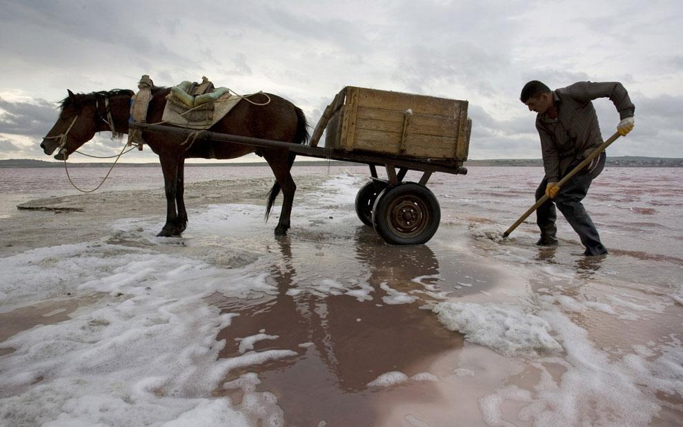 соль перевозят на лошадях, фото