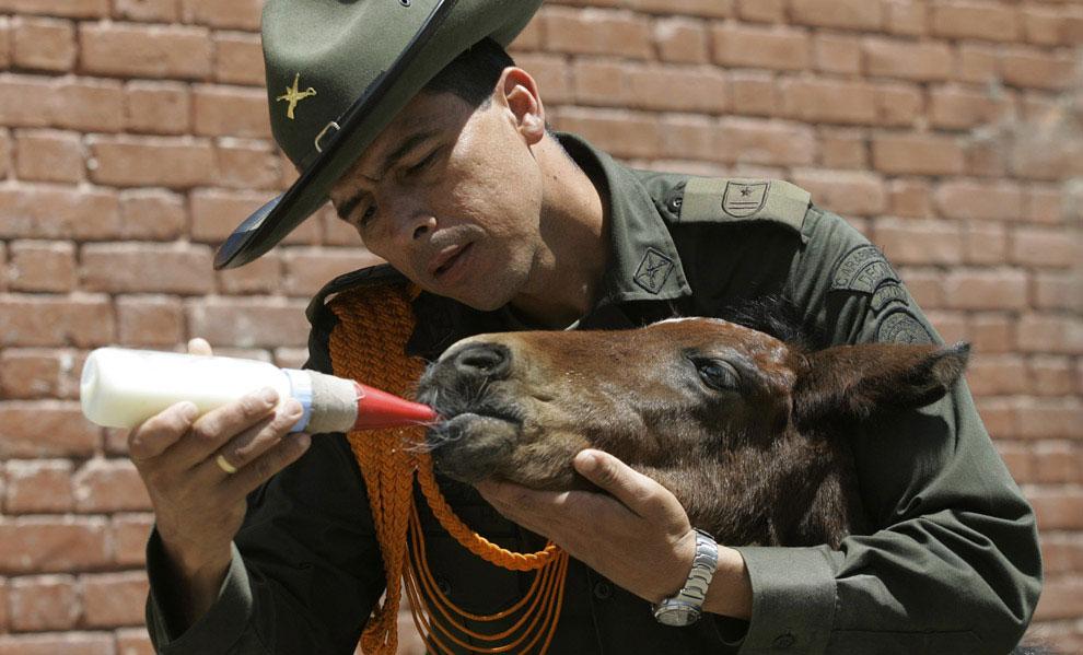 Колумбийская конная полиция, фото
