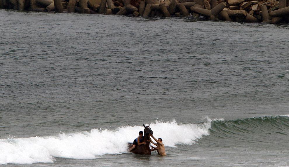купание коня, фото