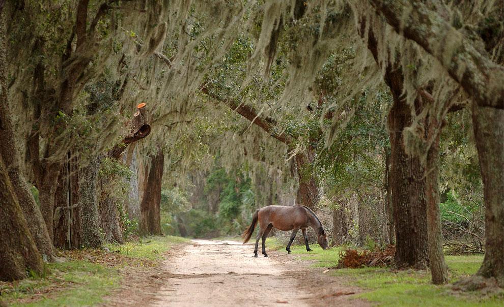 дикая лошадь, фото