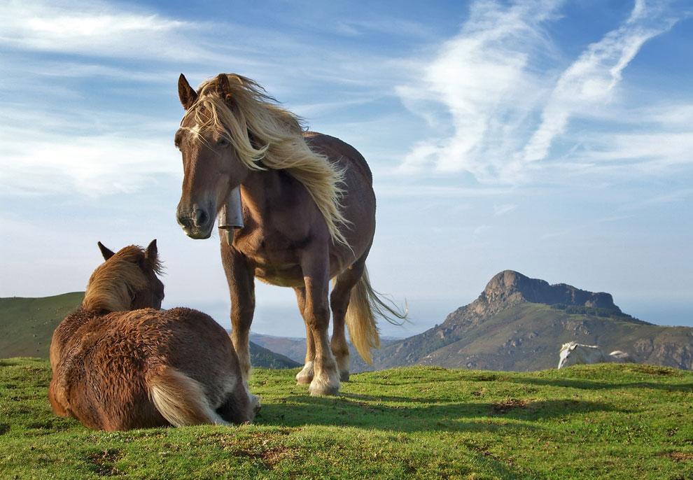 кони на пастбище, фото
