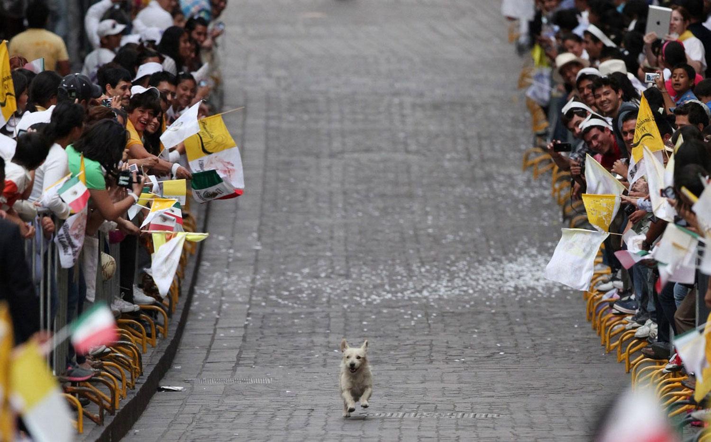 фото собаки на дороге