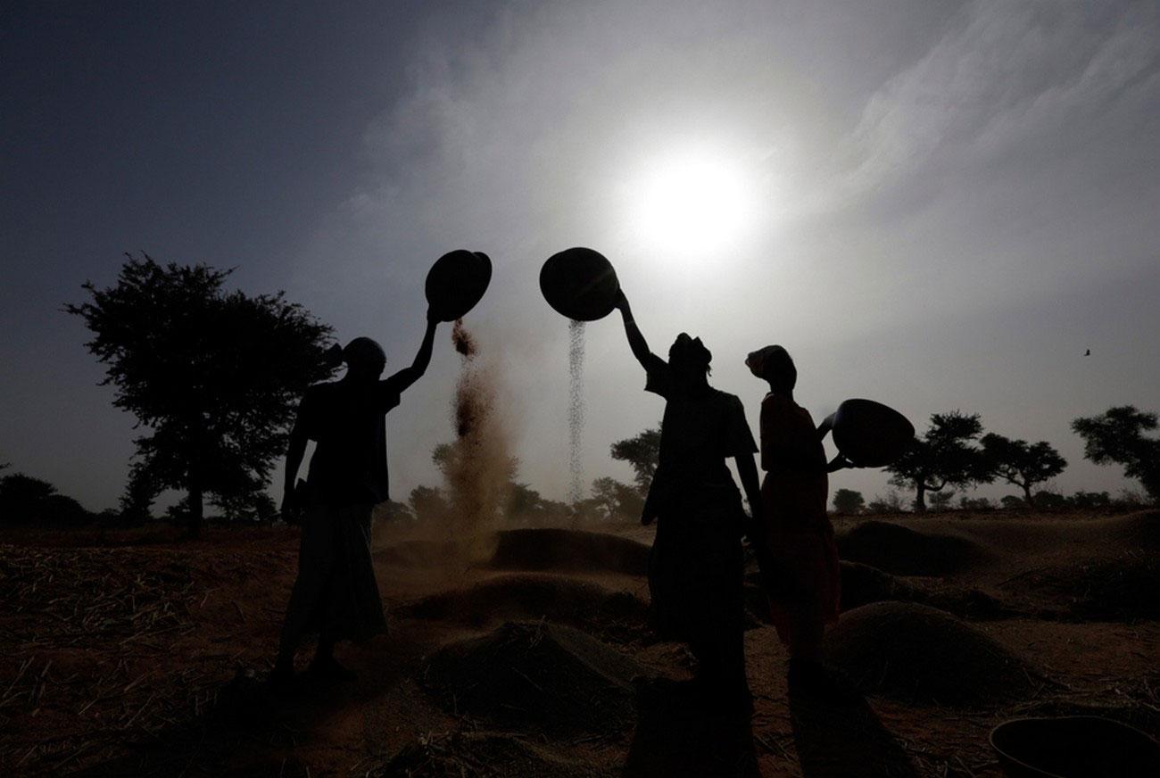 Женщины собирают урожай, фото Мали