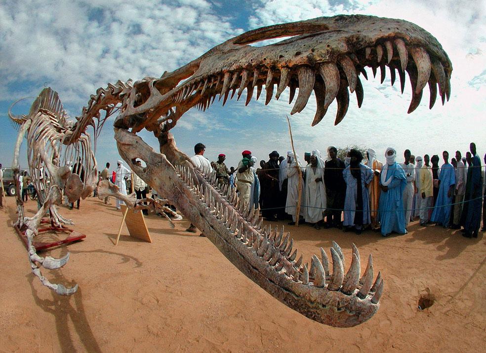 кости динозавра, фото