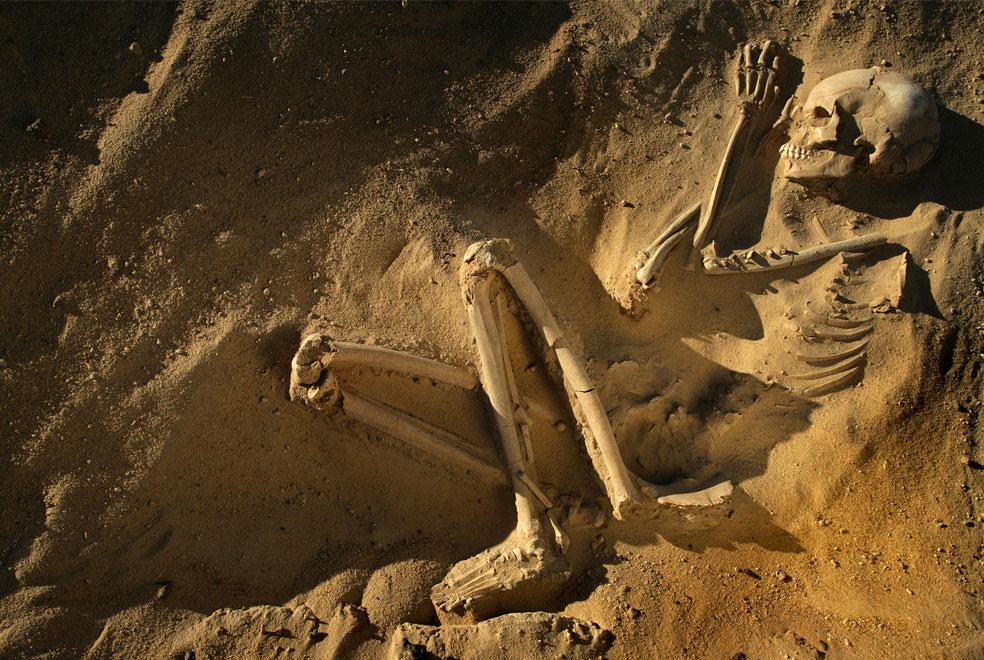 сохранившийся скелет тенерийца в пустыне, фото