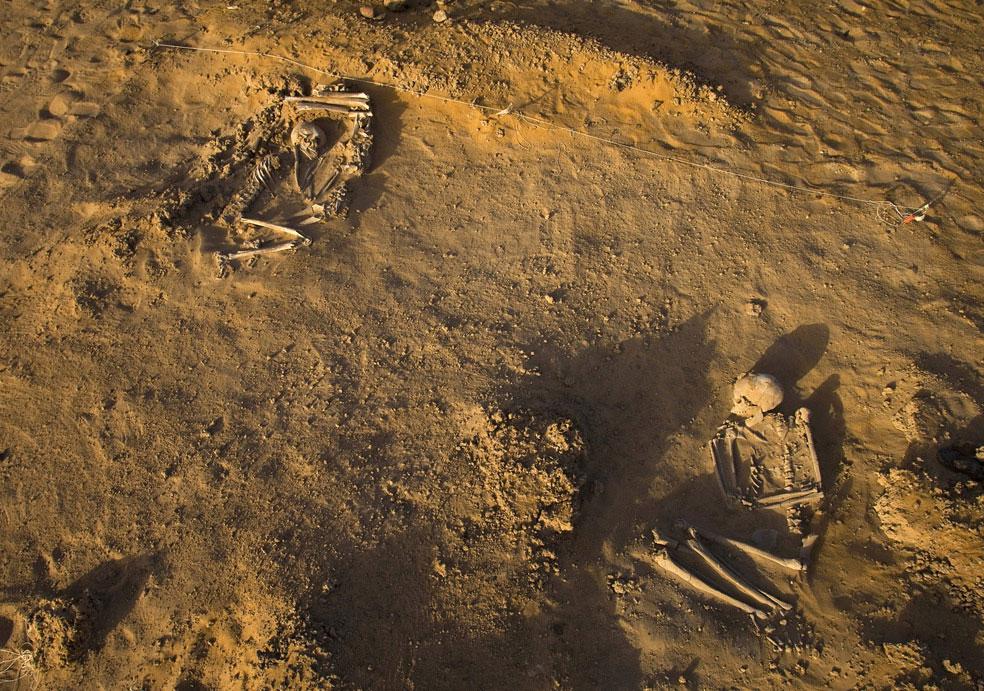 два скелета на раскопках в пустыне, фото