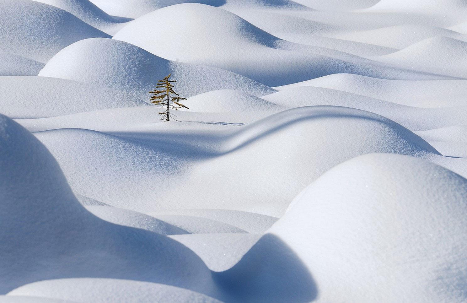 дерево среди сугробов