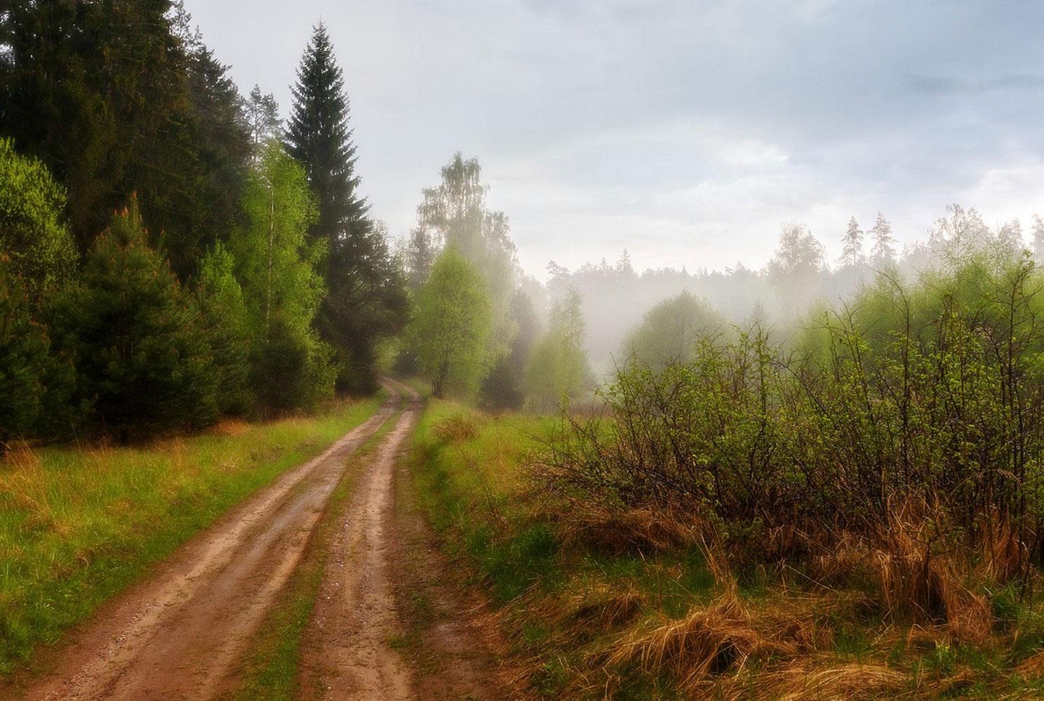 лес после дождя