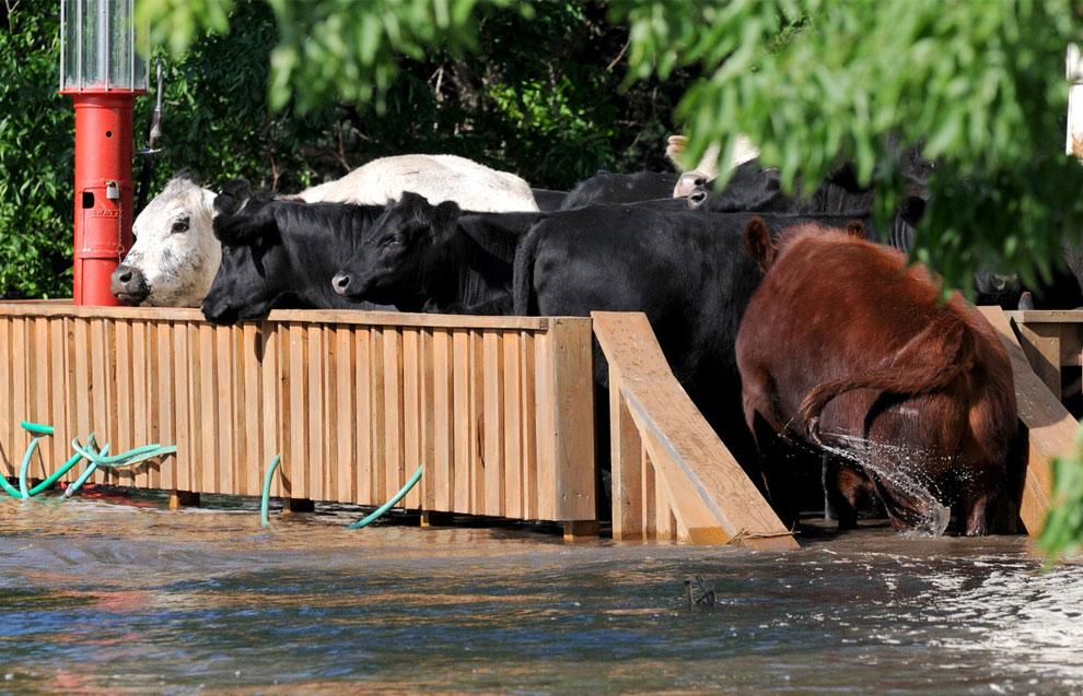 спасение животных при наводнении