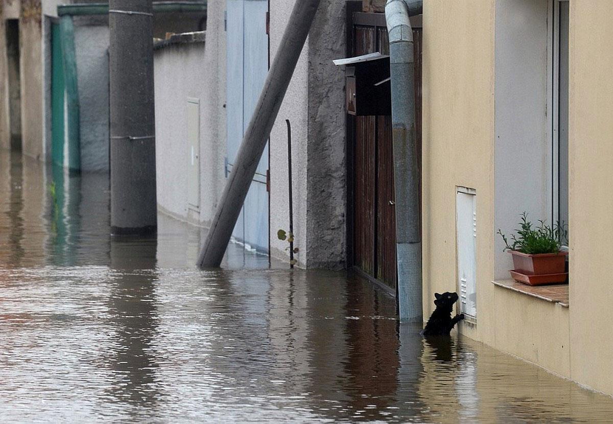 черная кошка в воде