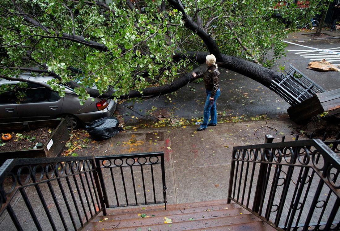 дерево упало на автомобиль, фото стихийного бедствия в Нью-Йорке
