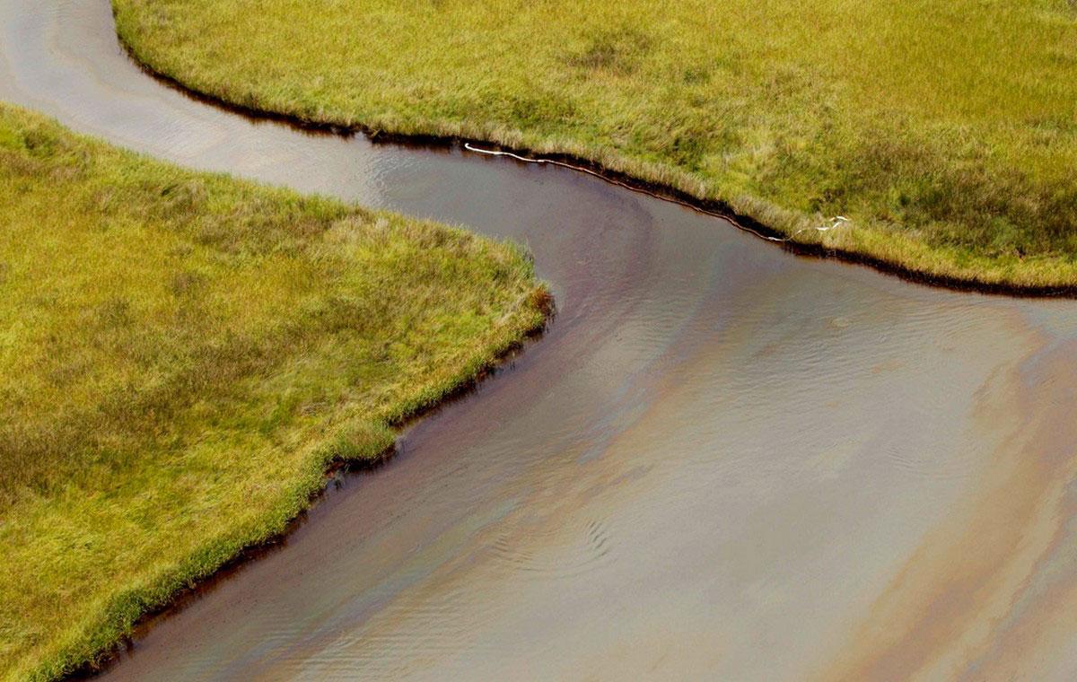 Пятно нефти на болоте