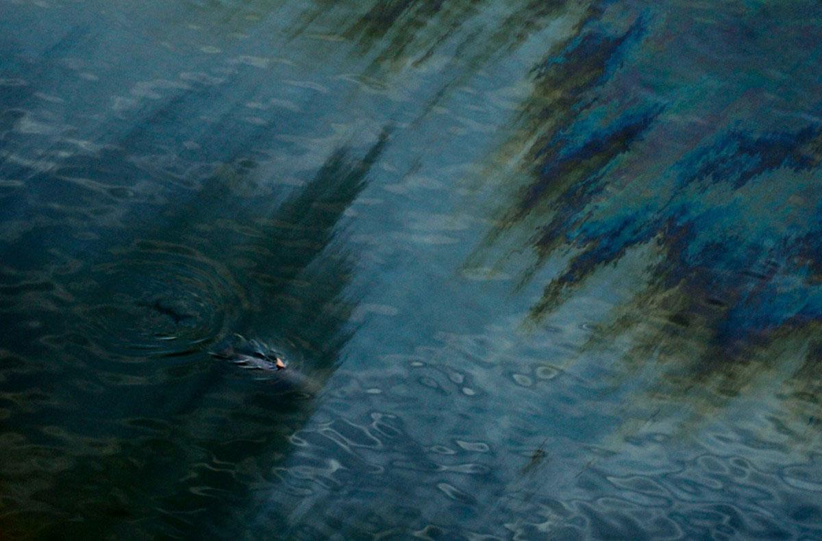 Дельфин в Мексиканском заливе