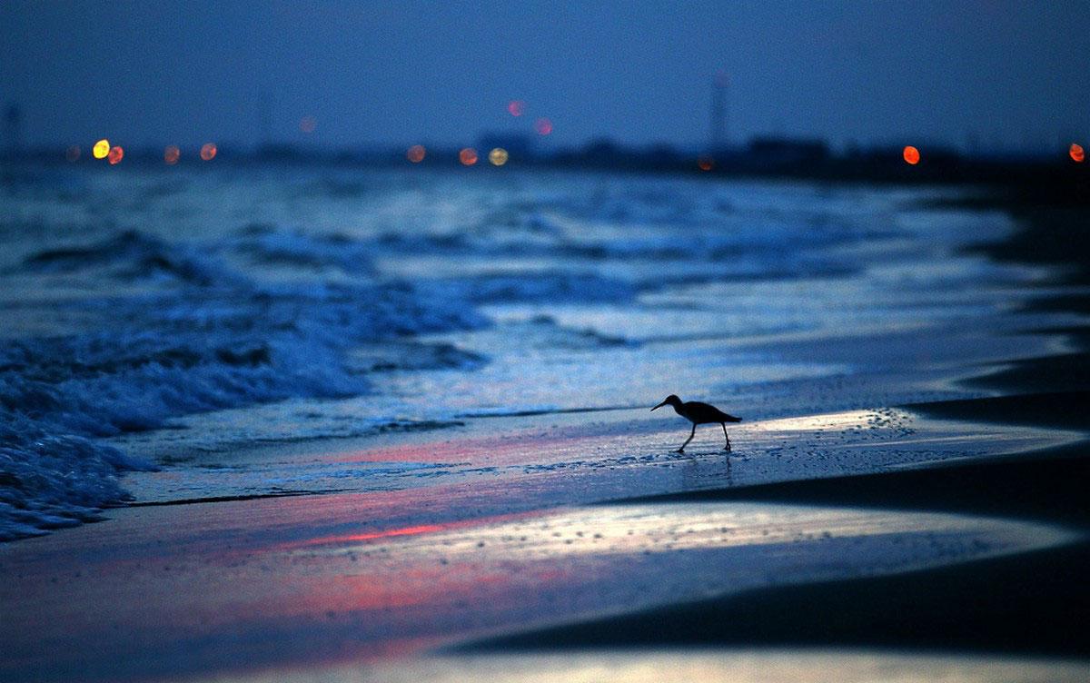 Крачка на пляже