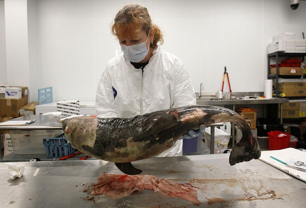 ветеринар осматривает мертвого дельфина