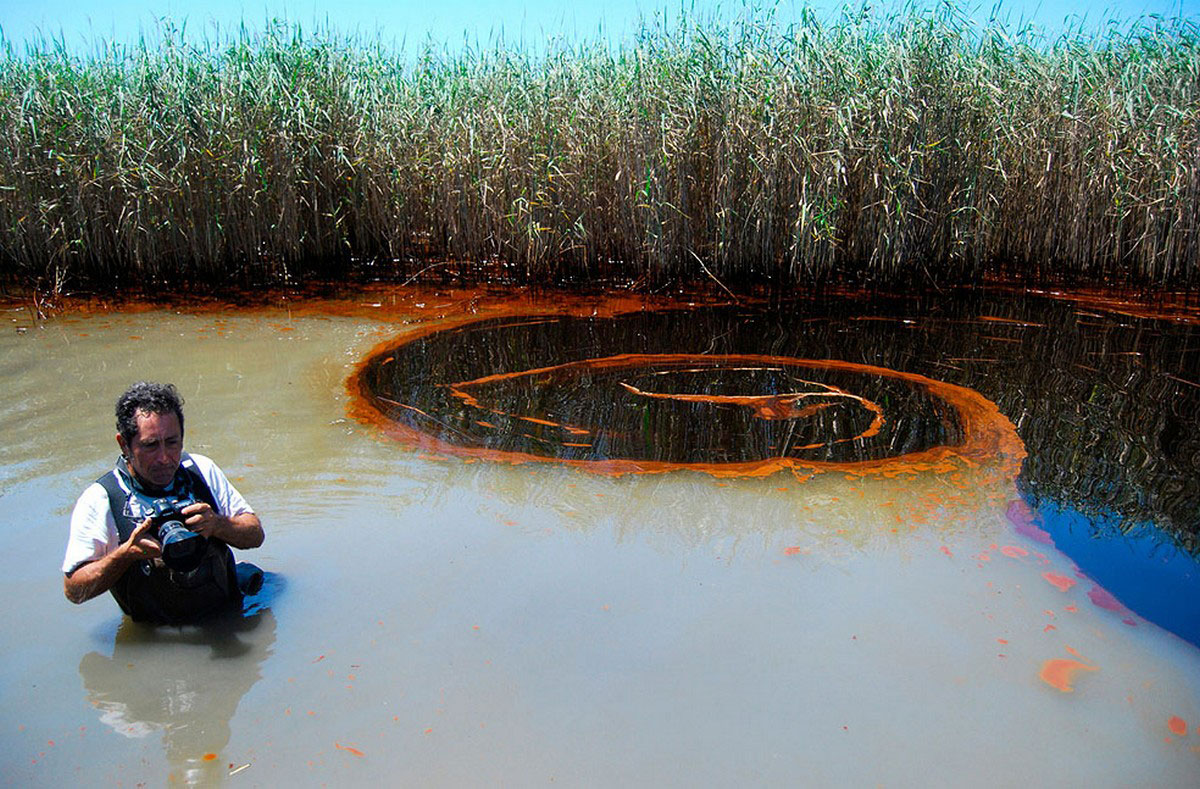 загрязненные нефтью заросли