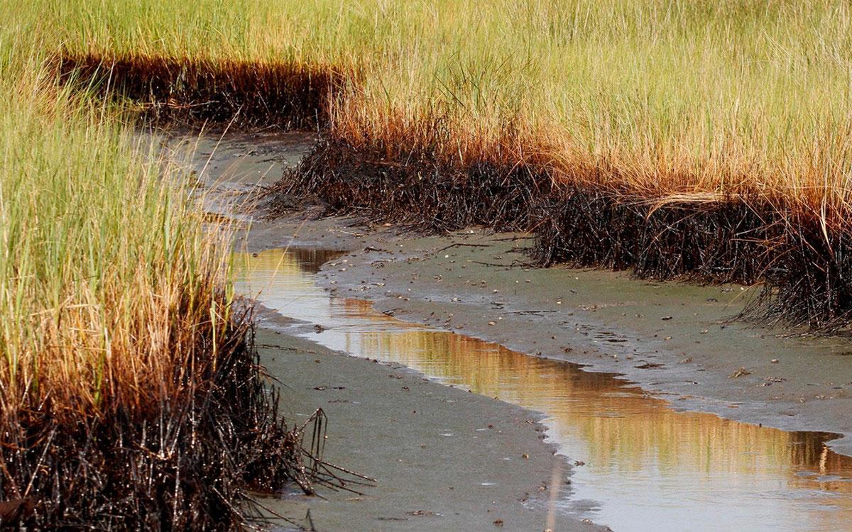 болота в бухте залива Баратария
