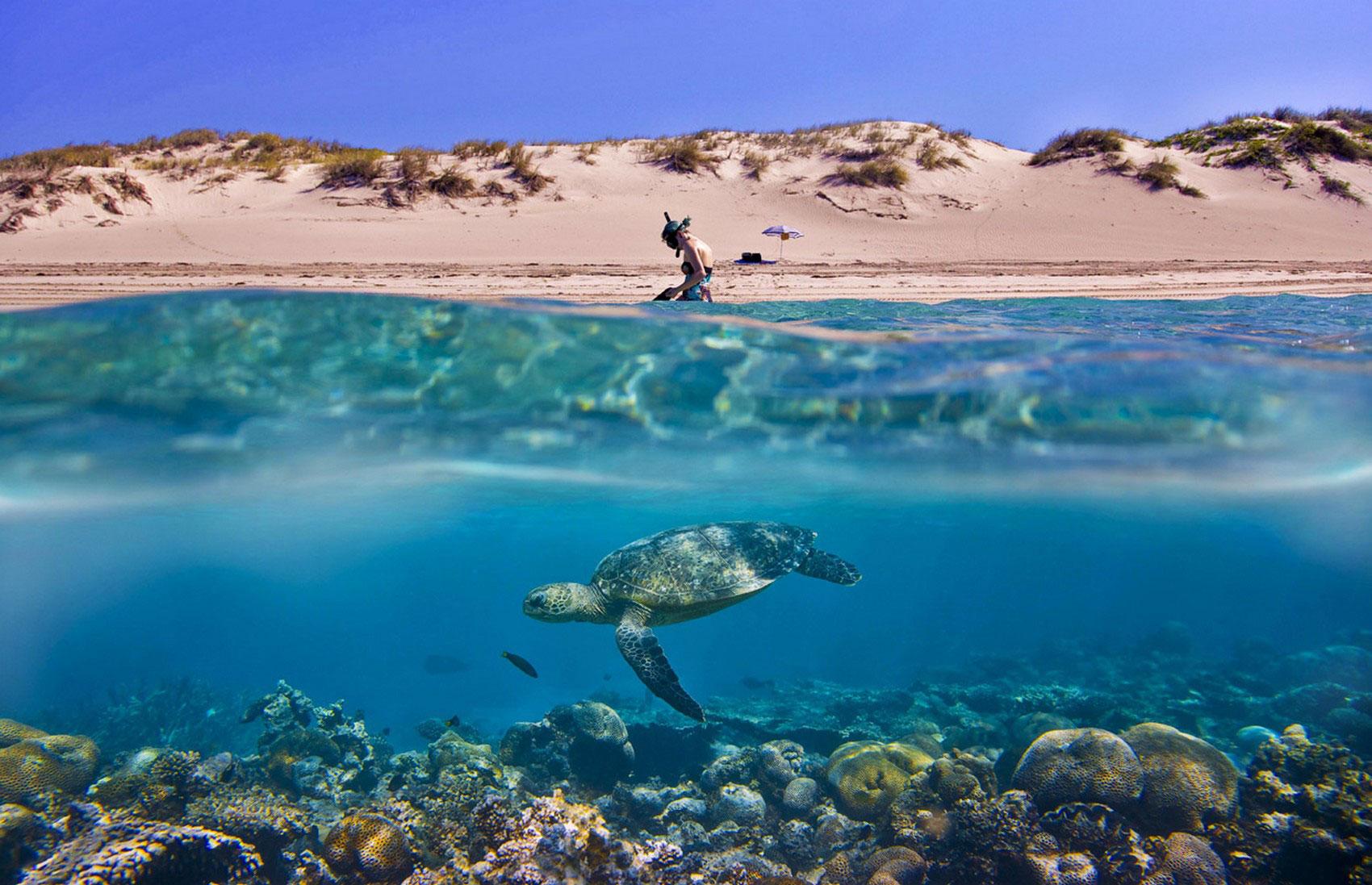 черепаха в море, фото