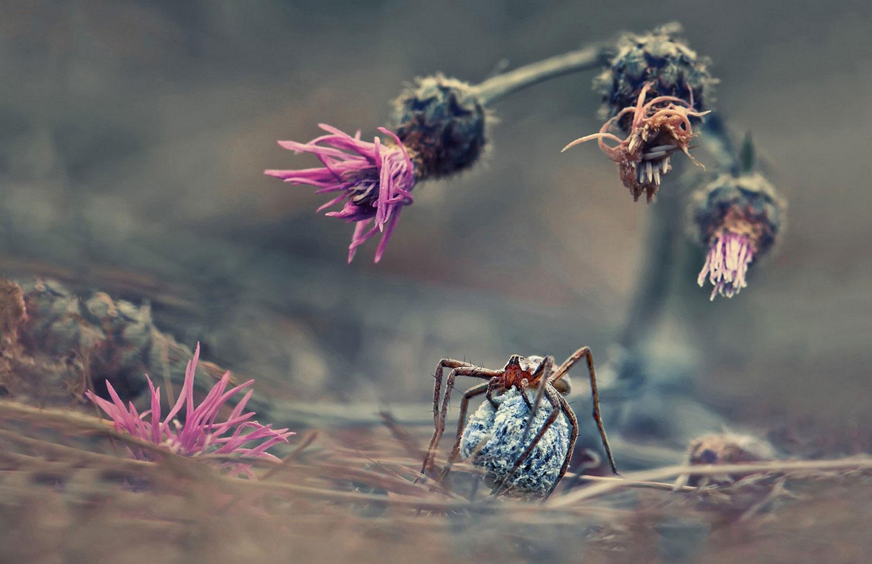 пауки, фотоконкурс