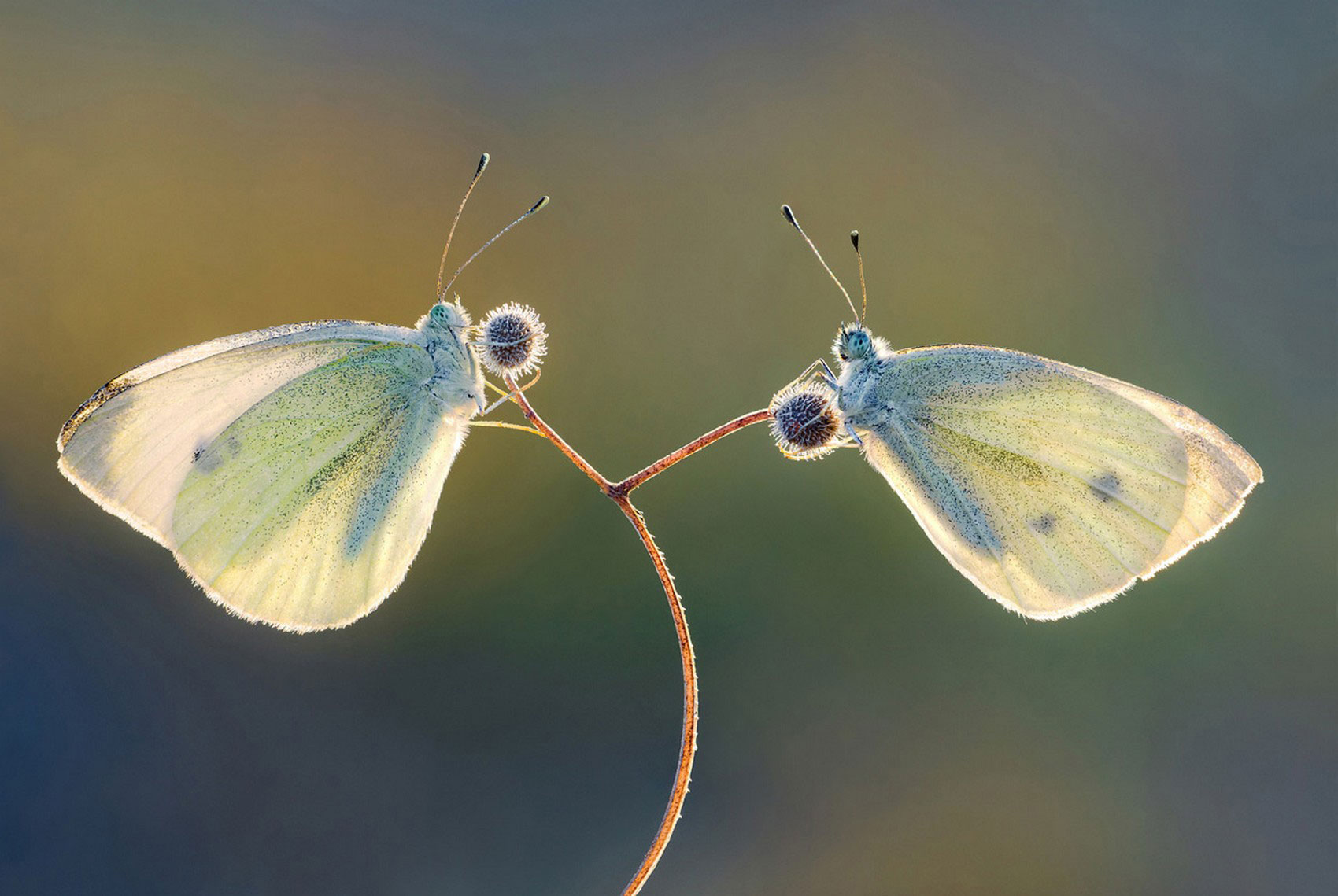 бабочки, фотоконкурс