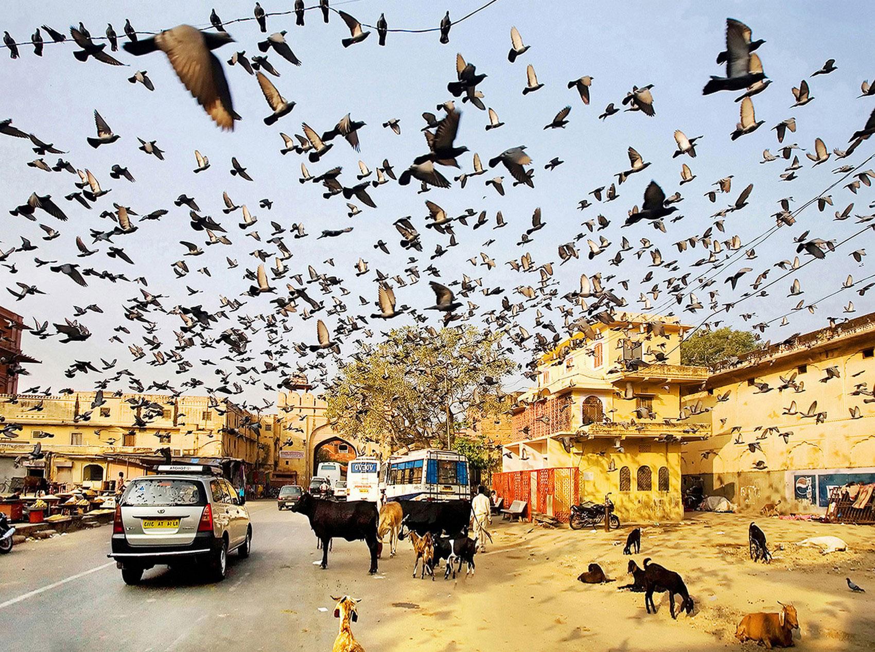 птицы в Джайпур, фотоконкурс