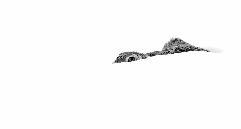 заяц в зимнем лесу, фото