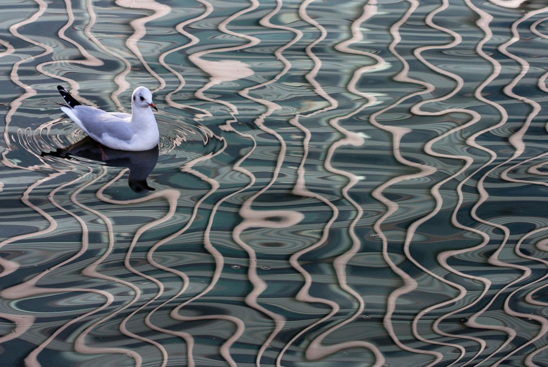 чайки на пристани Лондона, фото