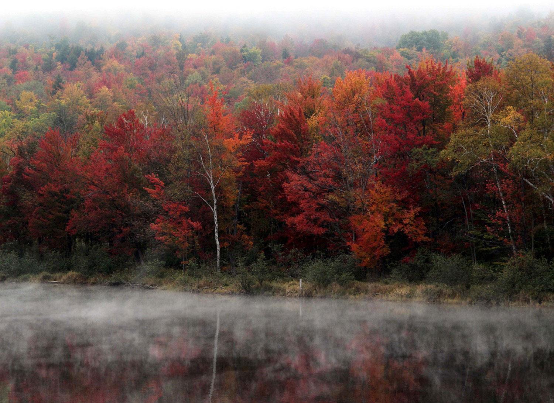 фото дикой природы и осеннего леса