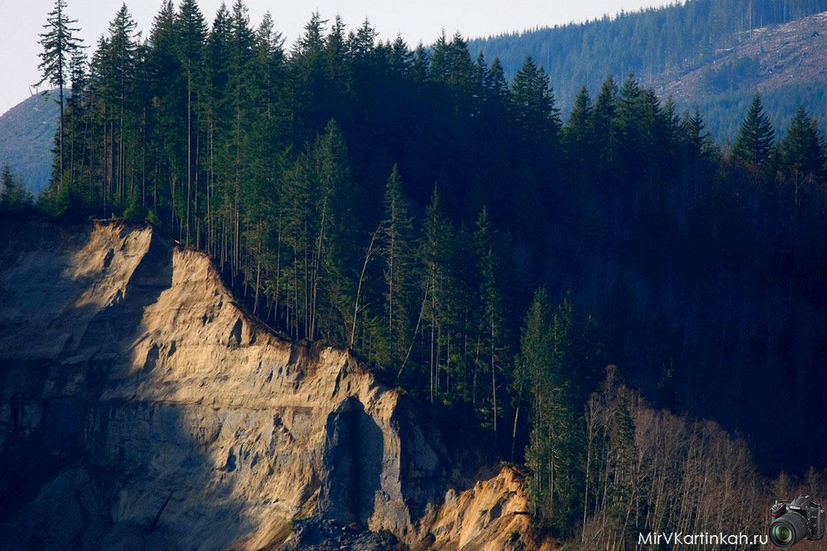 деревья на краю пропасти