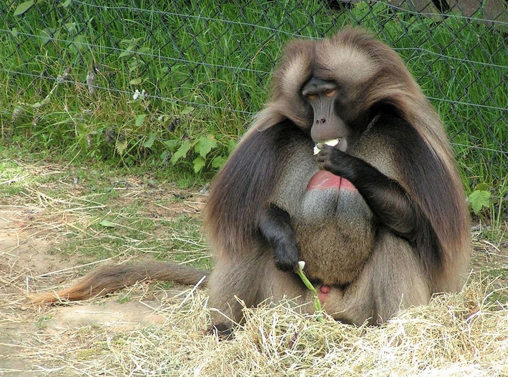 обезьяна, фото