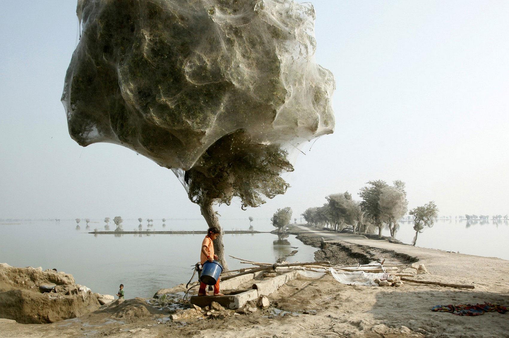 миллионы пауков поднялись на деревья