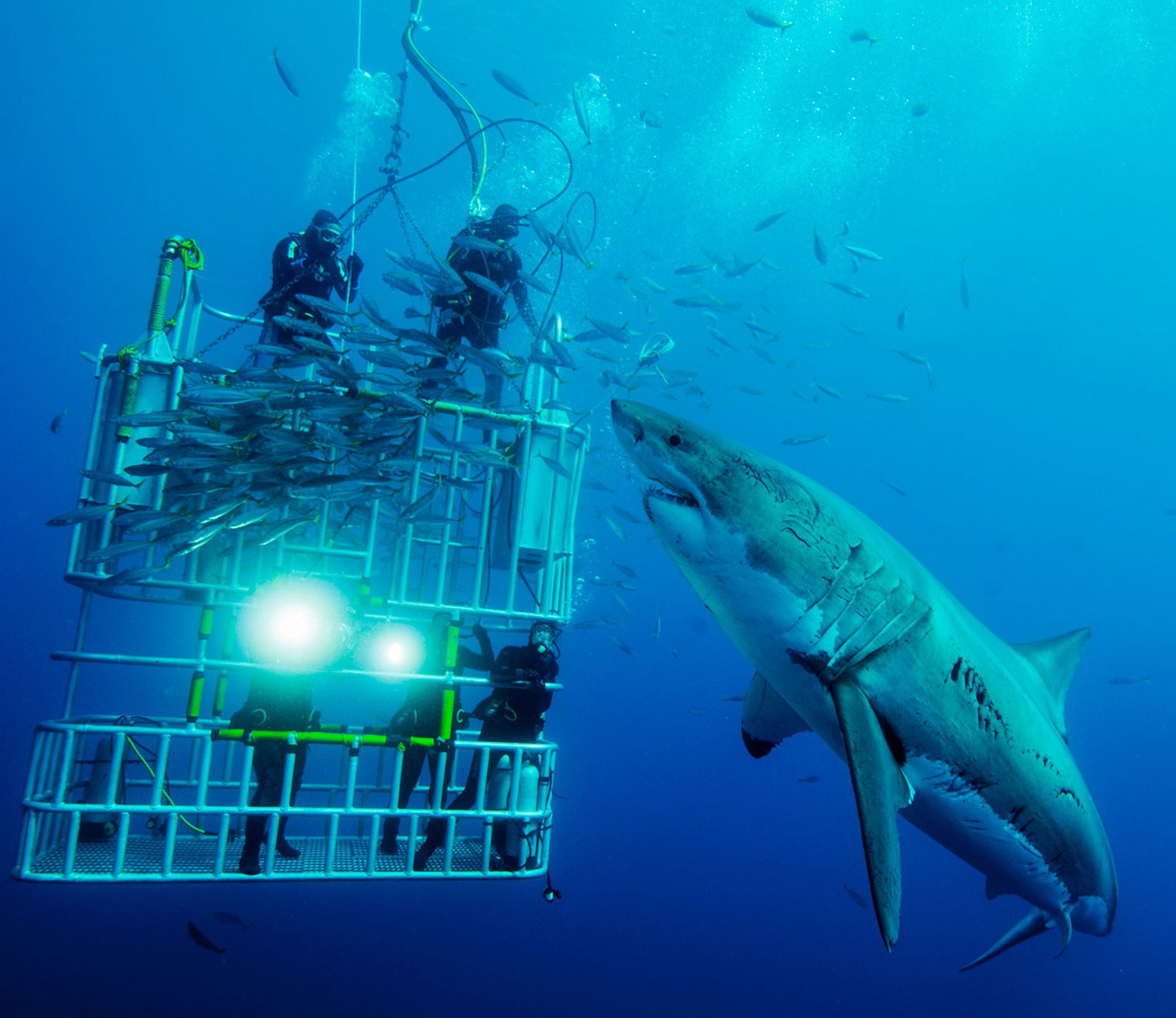 дайверы и акула, фото