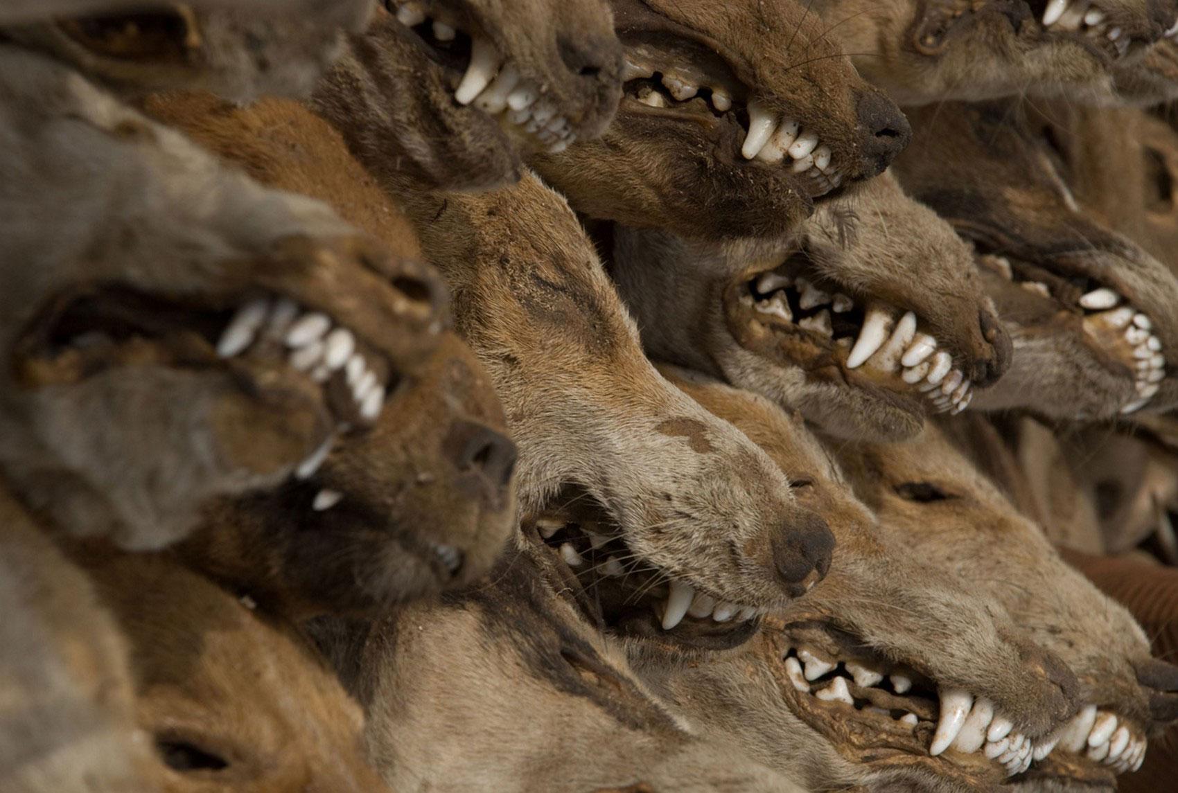 рынок чучел из животных, фото