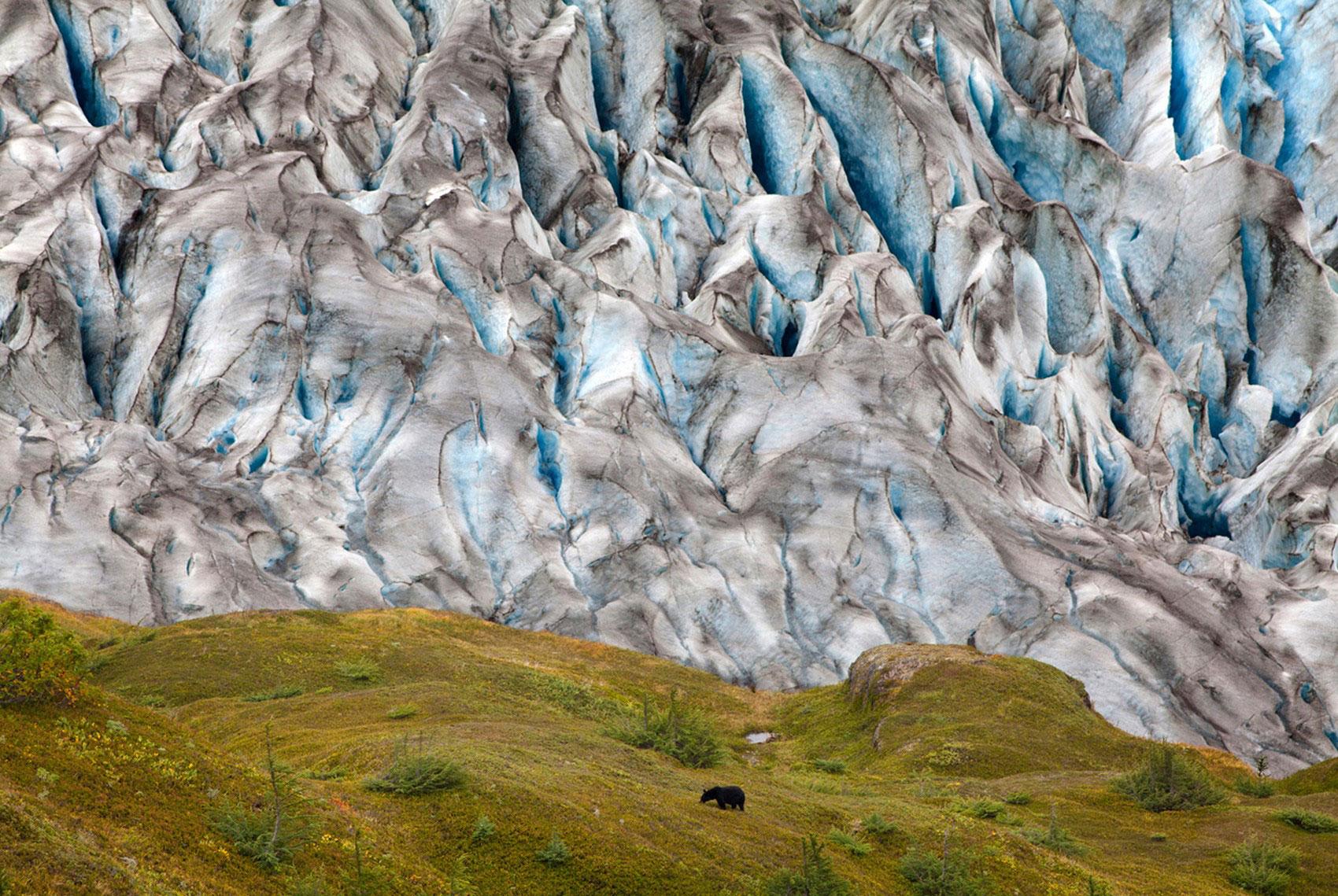 медведь у ледника, фото