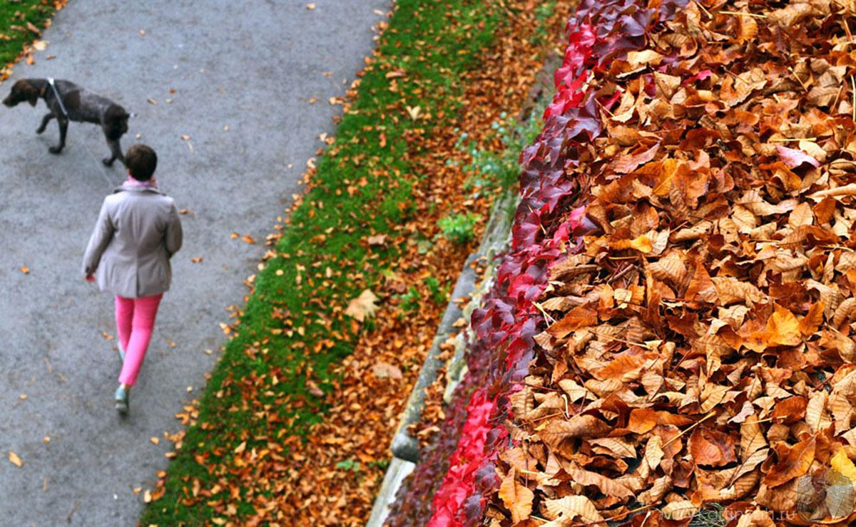 Женщина гуляет с собакой