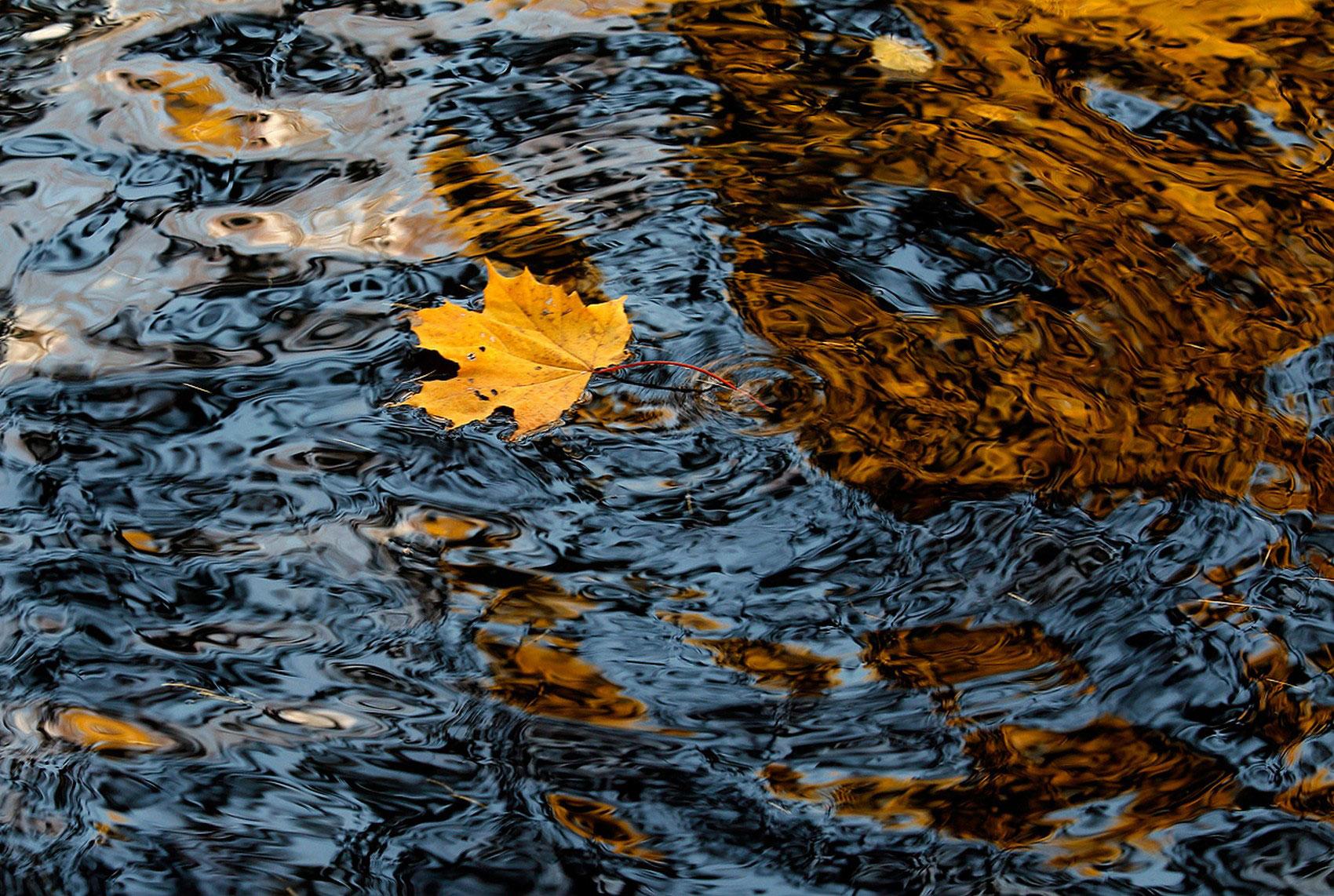 Кленовый лист в воде, фото