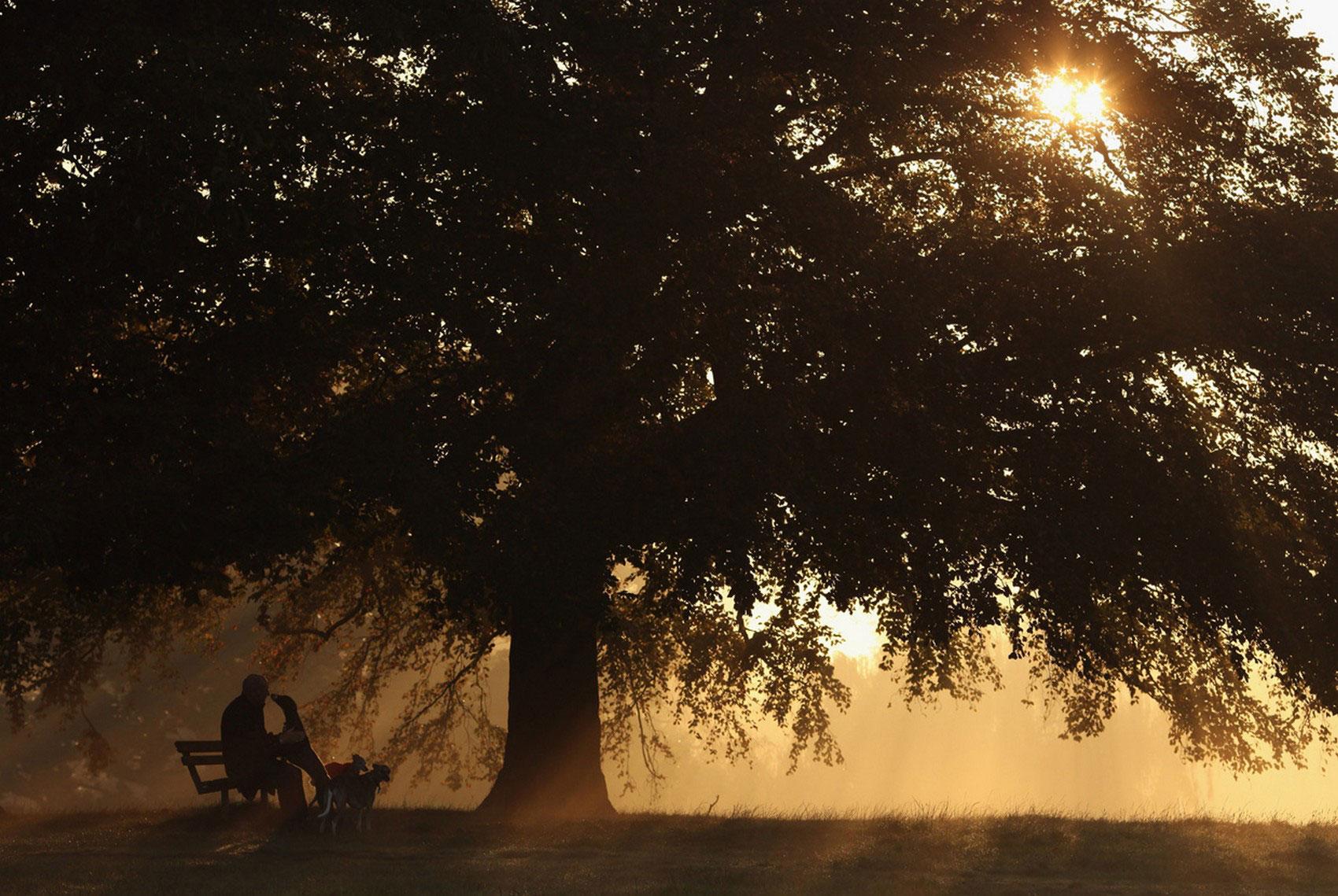 прогулка с собаками в осеннем лесу, фото