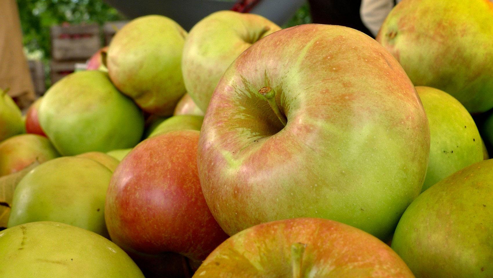 Осенний урожай яблок, фото
