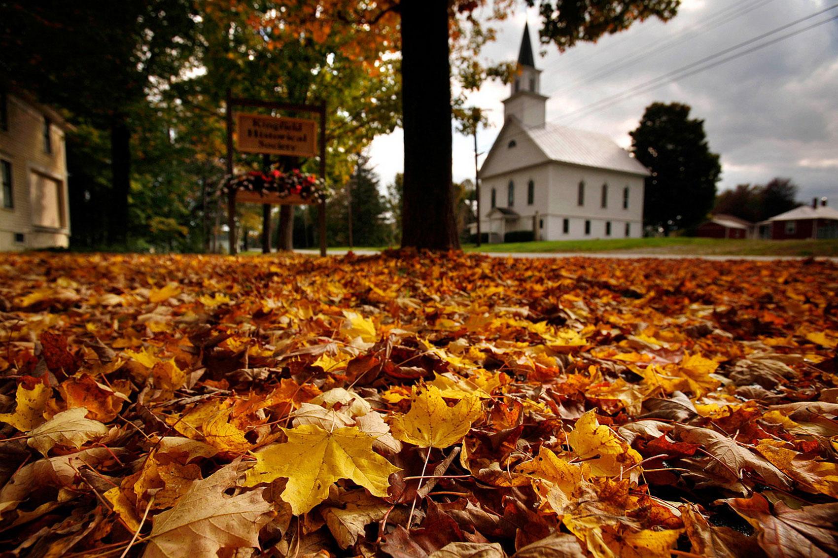 осенний ковер из кленовых листьев