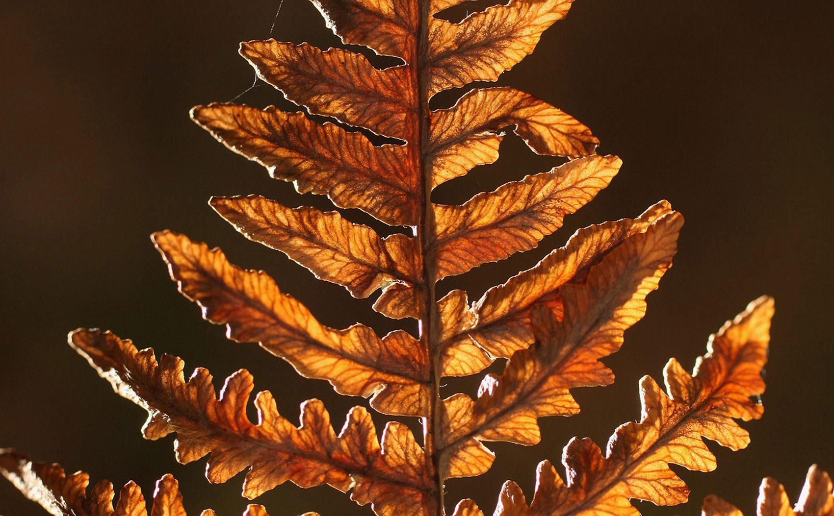 лист осенью