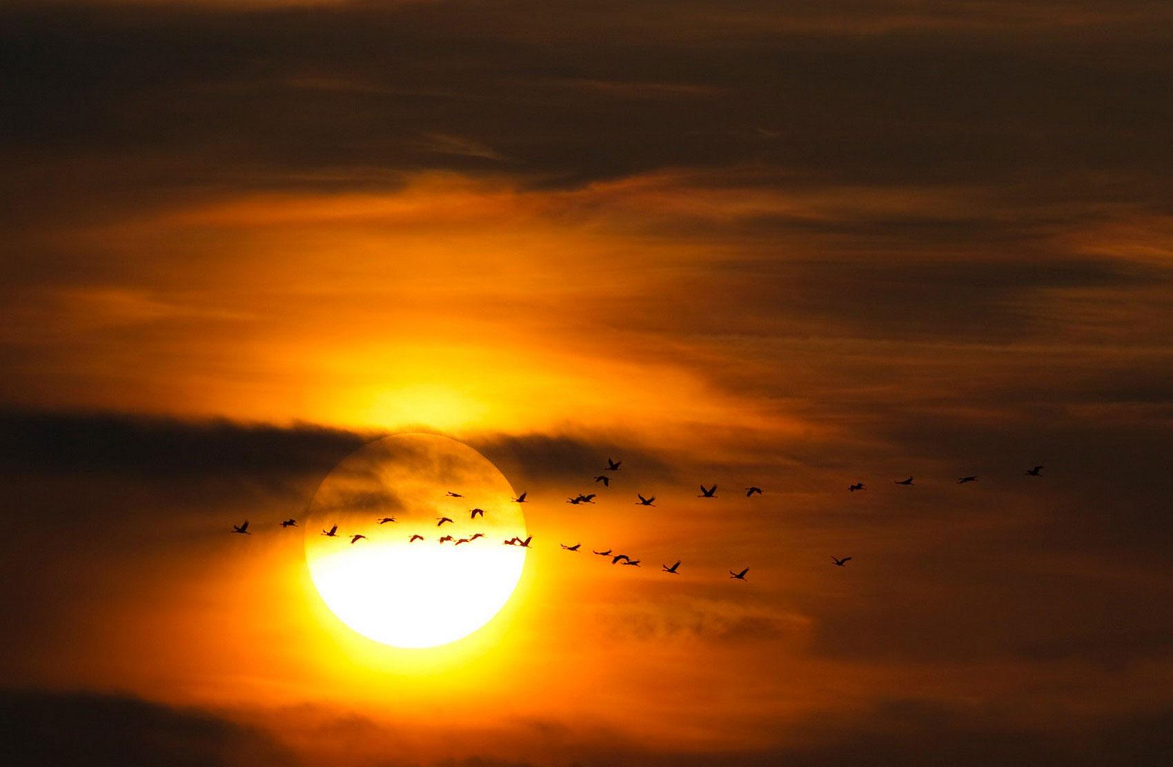 Миграция журавлей