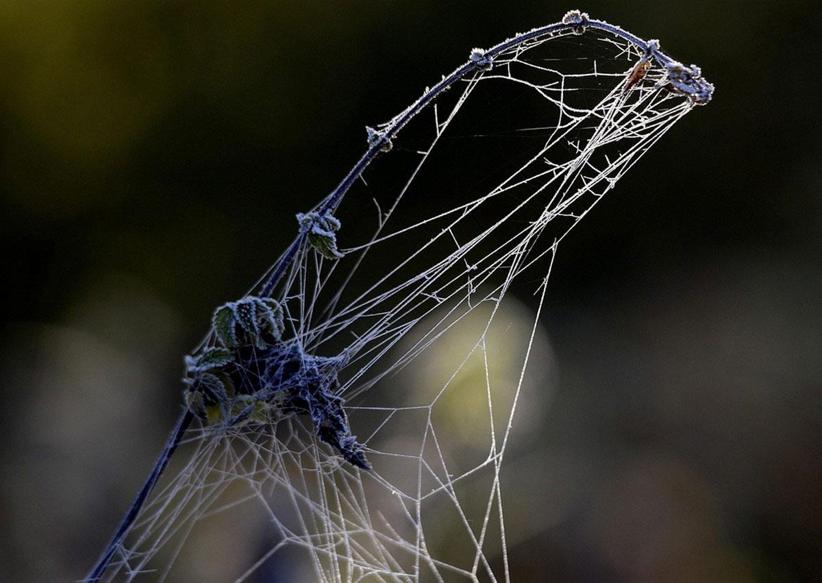 паутина в инее