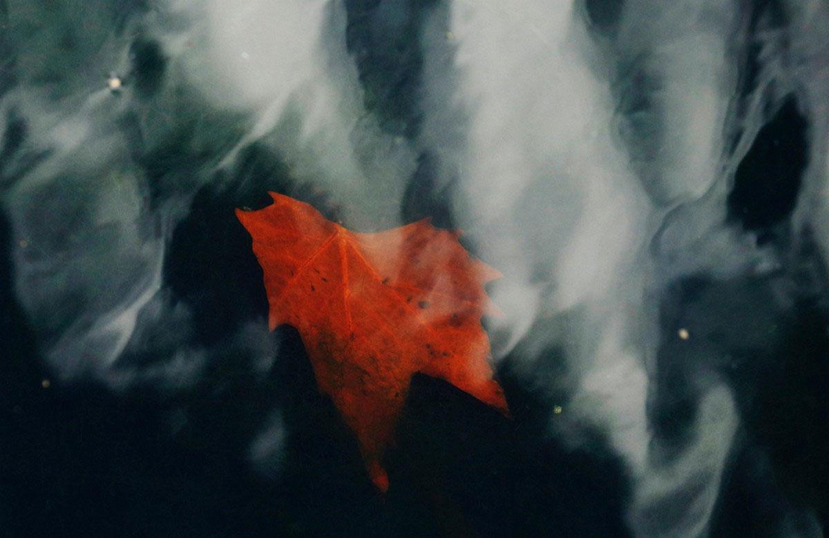 Красный кленовый лист