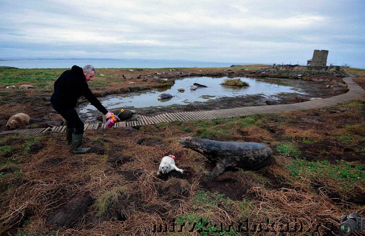 распыление краски на тюленя