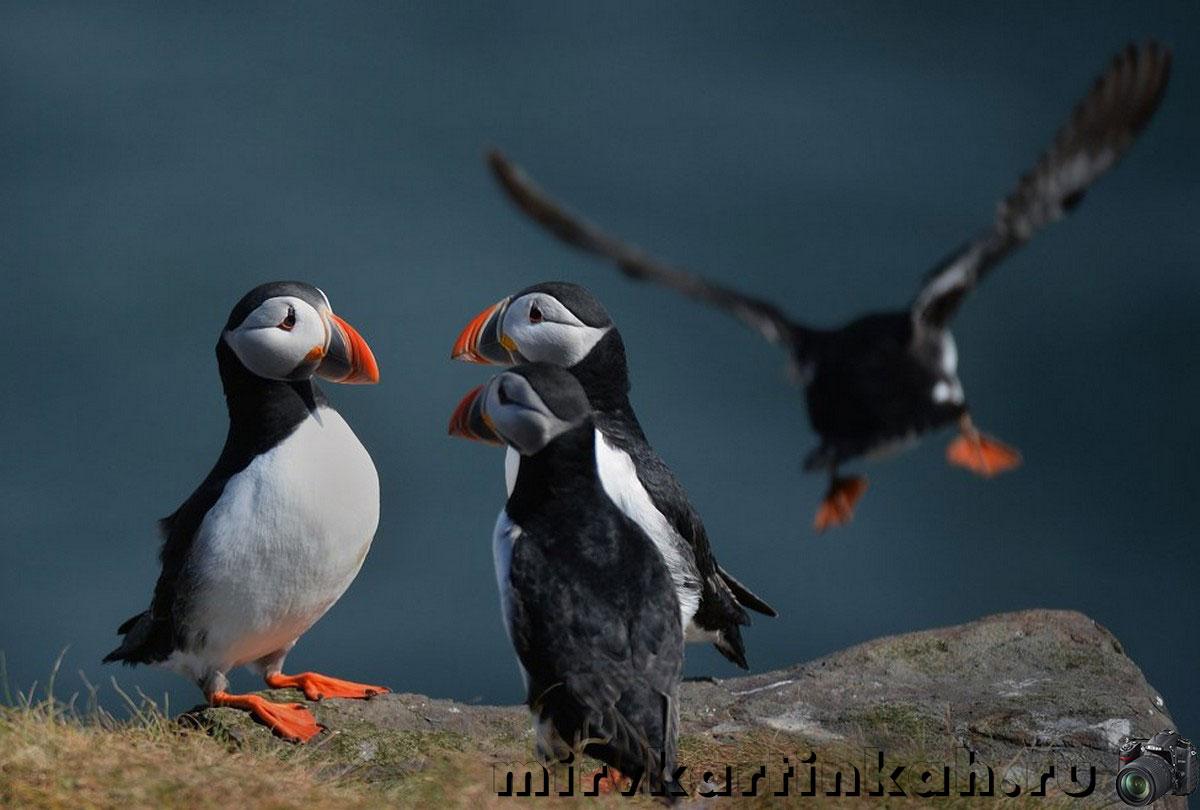 морские птицы на скалах