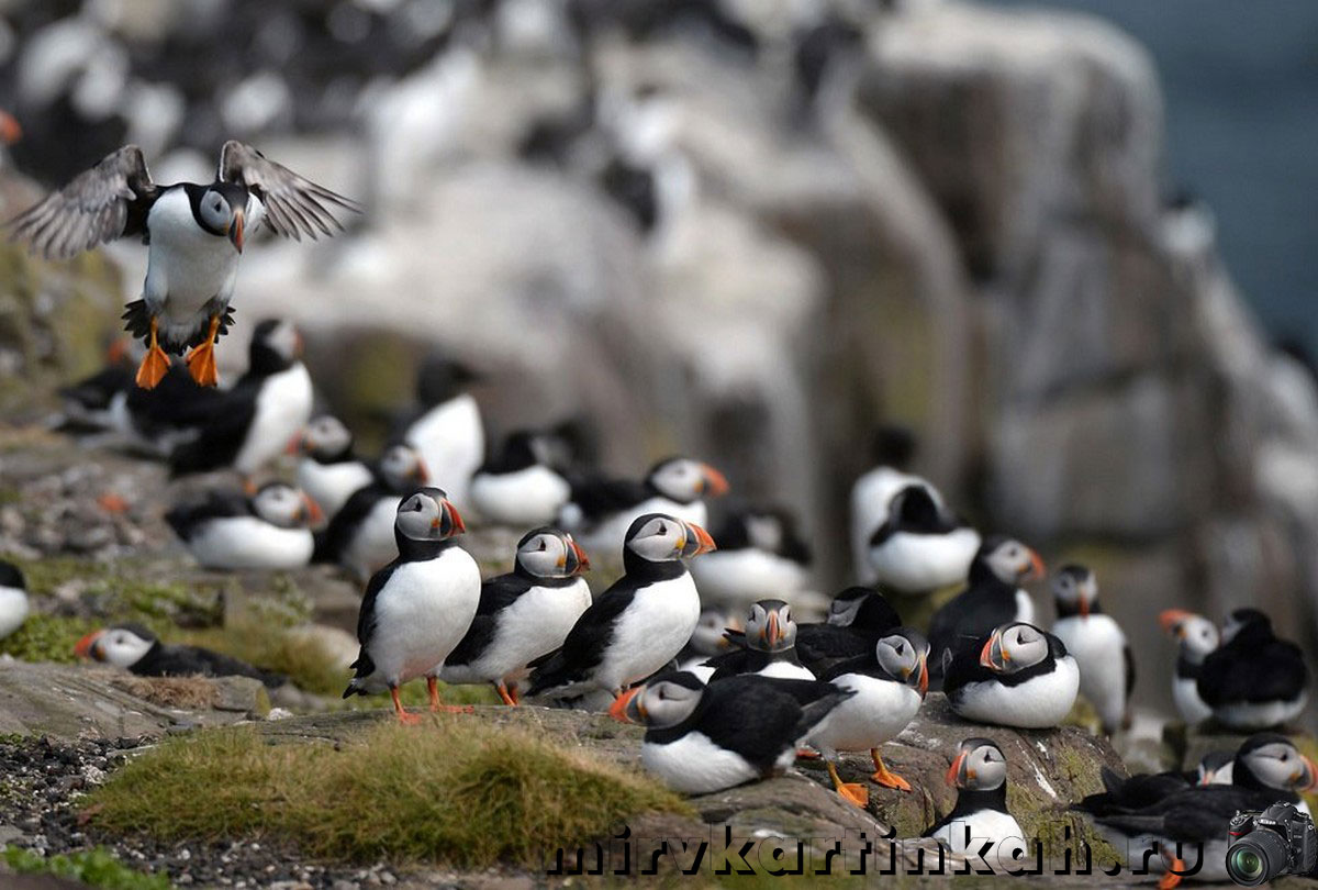 Пристанище птиц