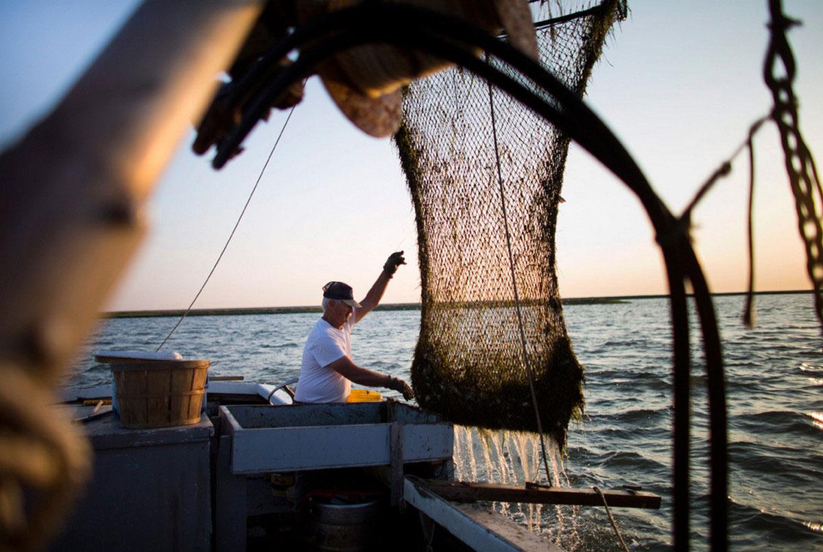 рыбак за ловлей крабов