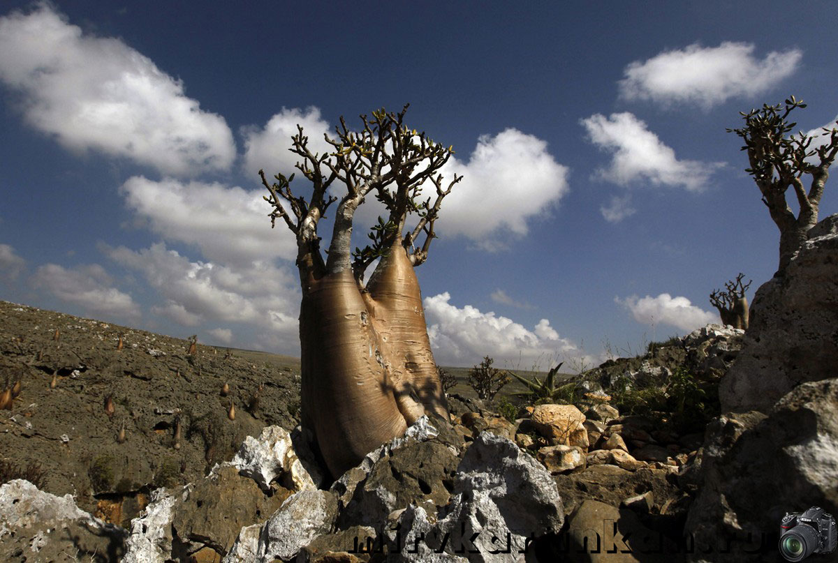 деревья на каменистой почве
